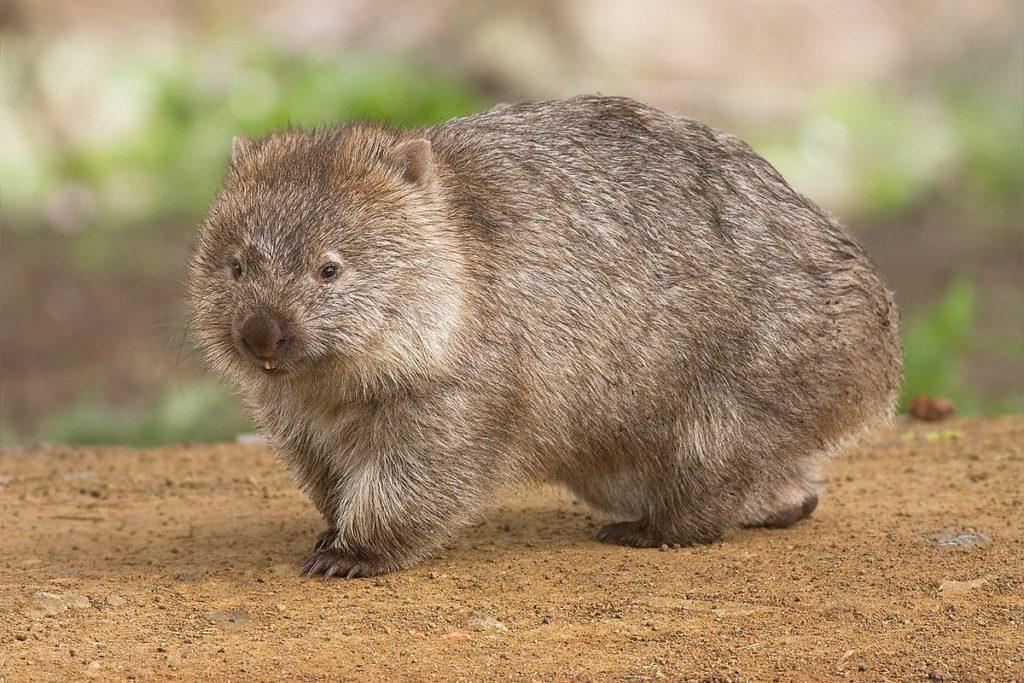 5 самых странных животных которые обитают в Австралии