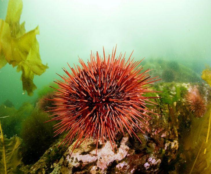 Какие морские обитатели очень опасны для туристов