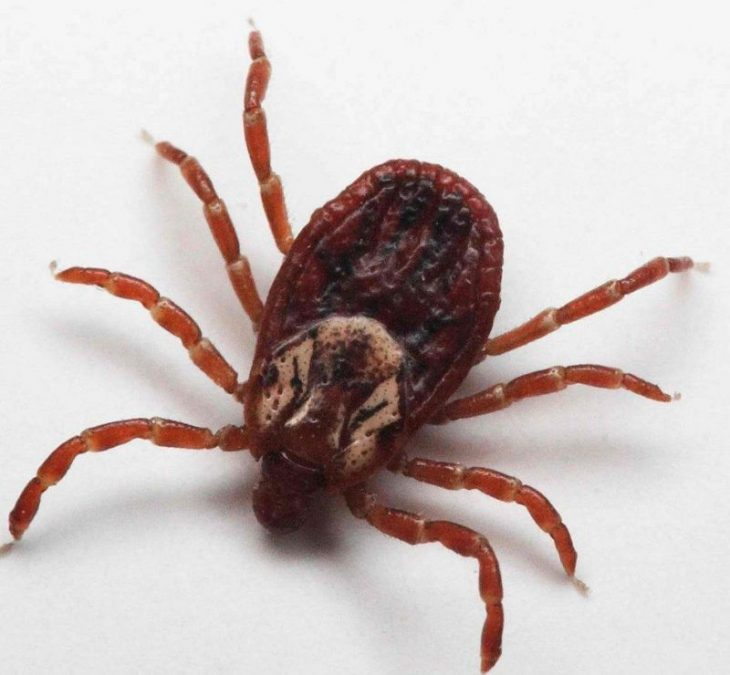 5 смертельно опасных насекомых во Вьетнаме