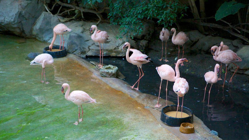 5 городов мира с самыми потрясающими зоопарками