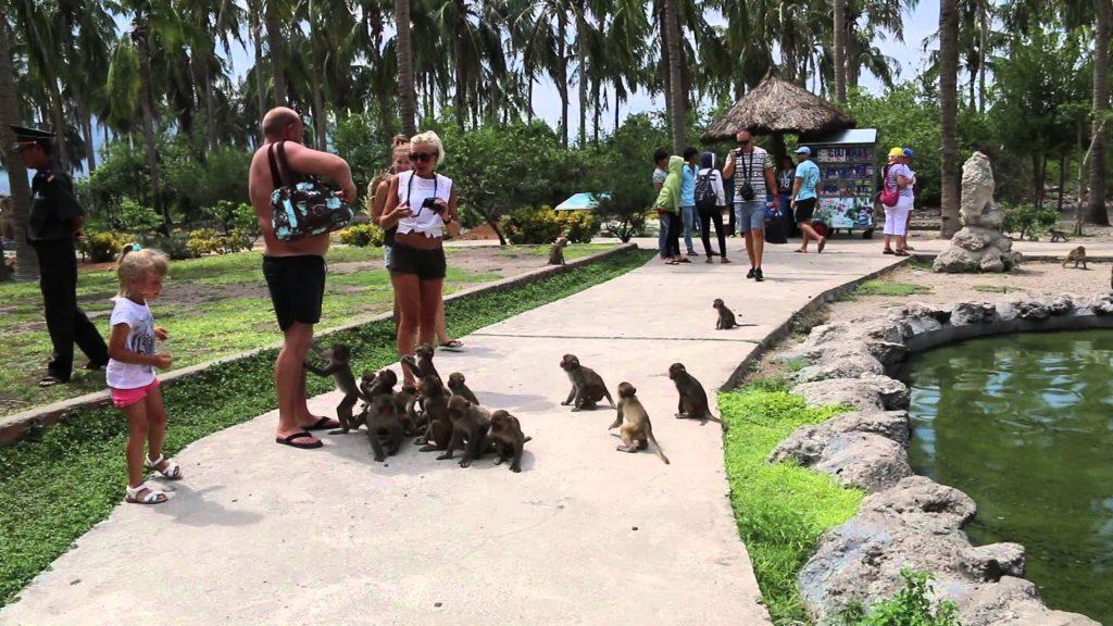 Почему туристам нужно быть предельно осторожными на Острове Обезьян в Нячанге