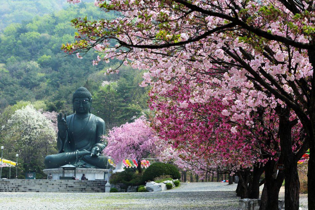 Подходит ли Южная Корея для весенне-летнего сезона отдыха