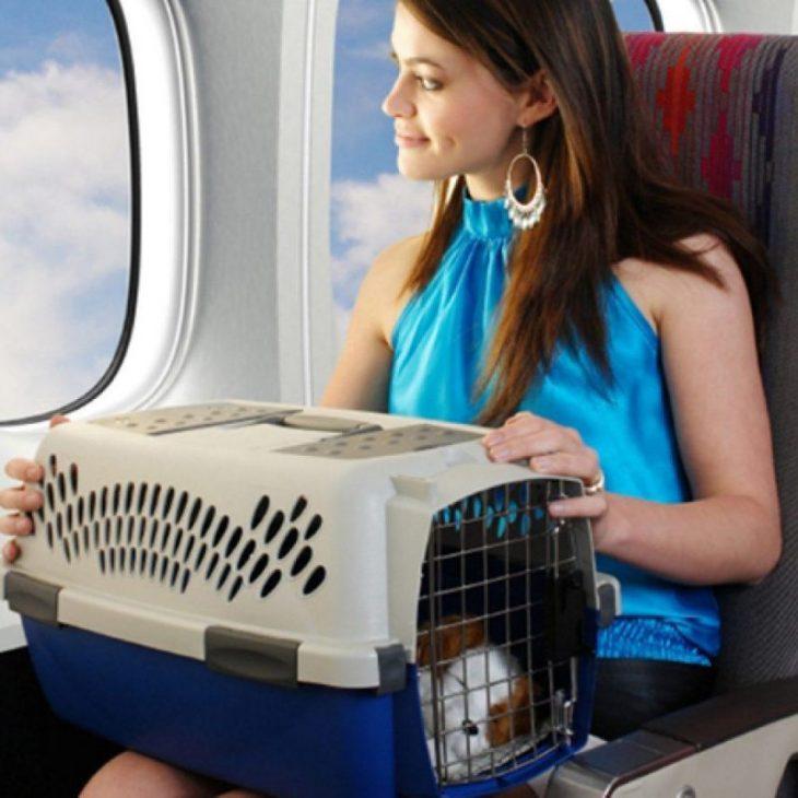 10 советов как облегчить перелет с домашним питомцем