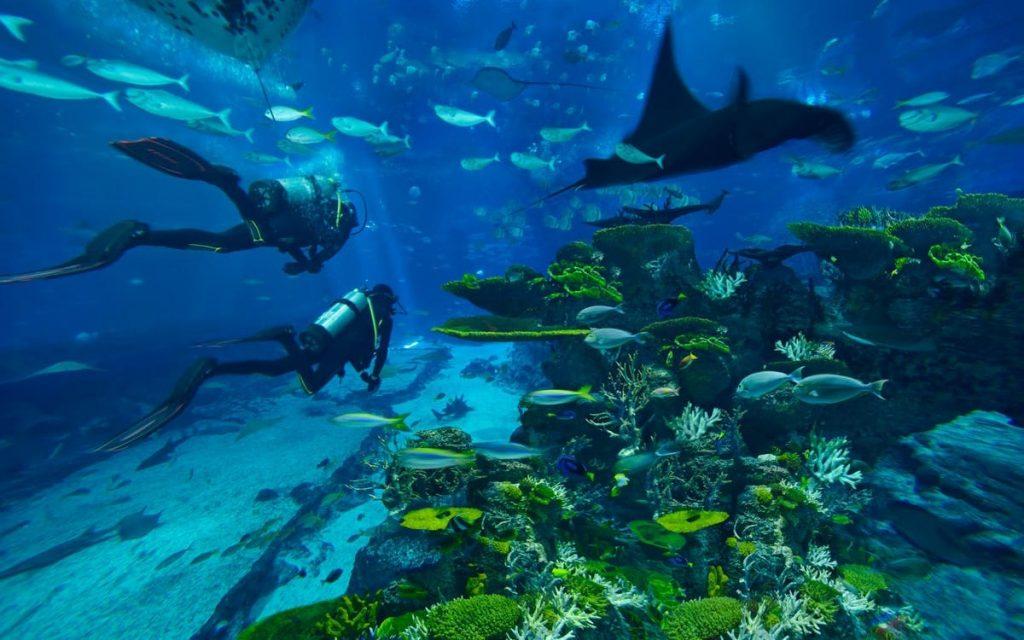 Самые лучшие океанаримуы мира