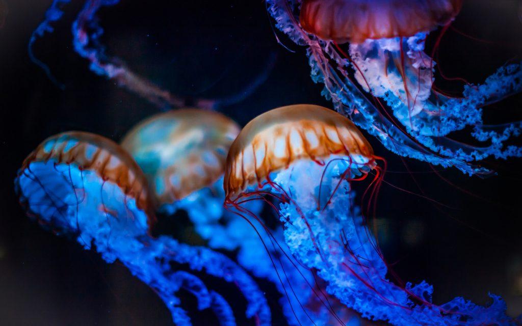 5 популярных курортов где медузы могут сильно испортить отдых