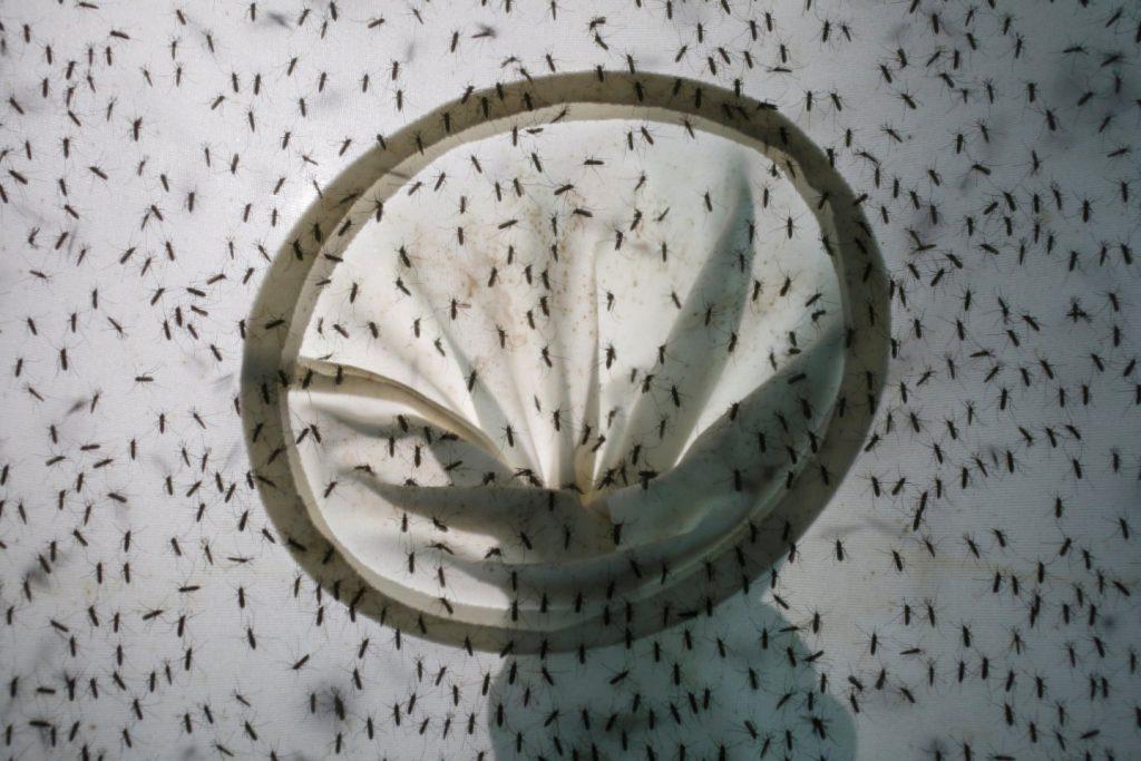 Почему туристы должны всерьез опасаться комаров в Таиланде
