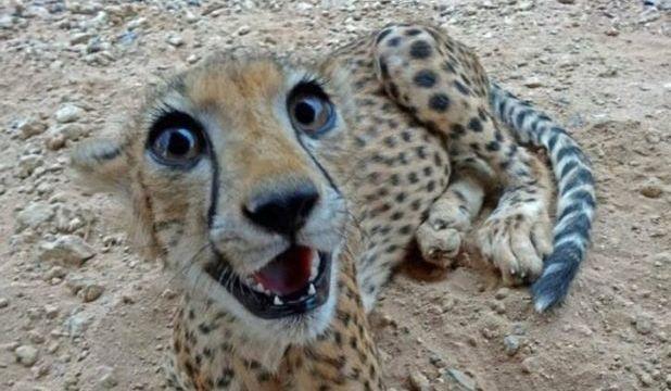 Животные, которые могли бы получить Оскар за актерское мастерство